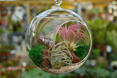 Air Plant Indoors