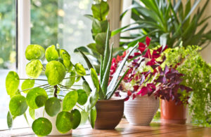 grouping indoor plants
