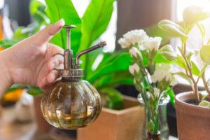 misting indoor plants