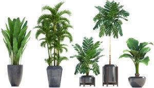 Plant pot shapes