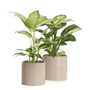 indoor plant pots with scale