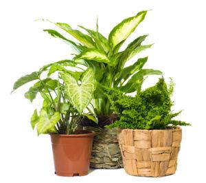 plant pot textures