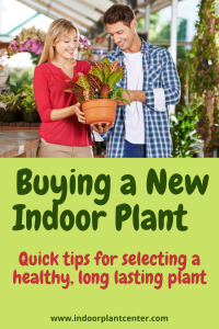 Buying a New indoor Plant