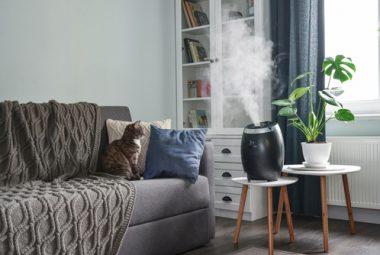 Indoor Plant Humidifier