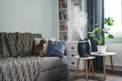 Indoor Plant Humidifier