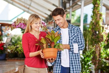 Purchasing A New Indoor Plant