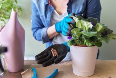 Indoor Plant Fertlilizer
