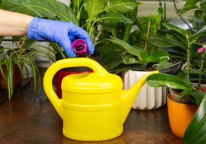 fertilizing orchid plant