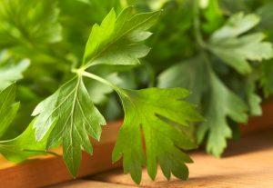 Fresh,Flat-leaf Parsley,
